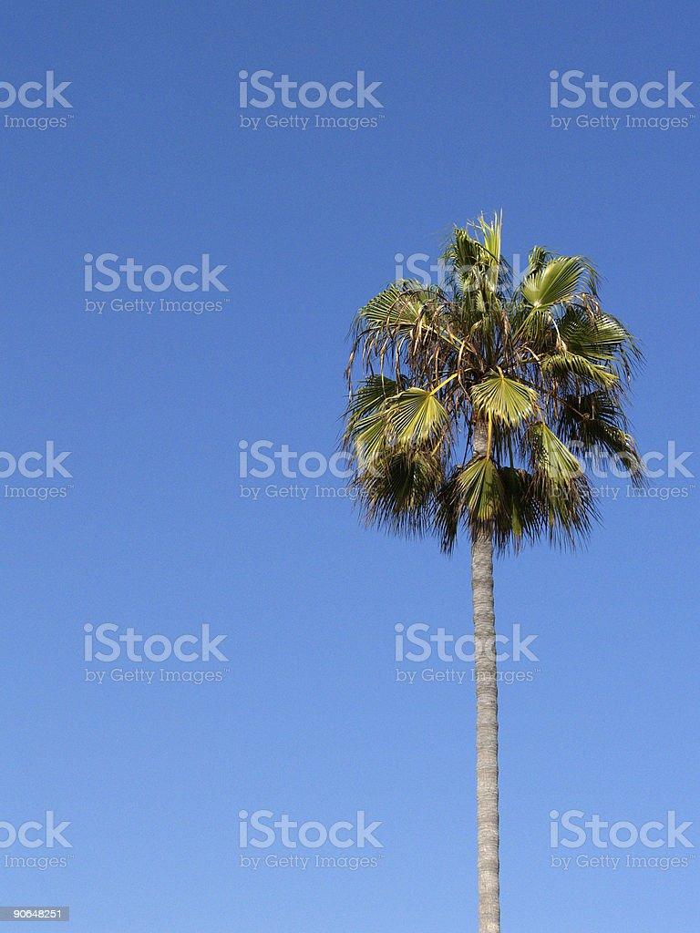 Sunny Palm Tree royalty-free stock photo
