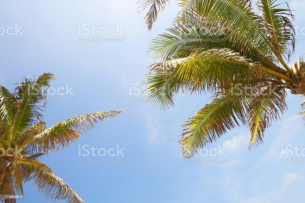 Sunny Palms royalty-free stock photo