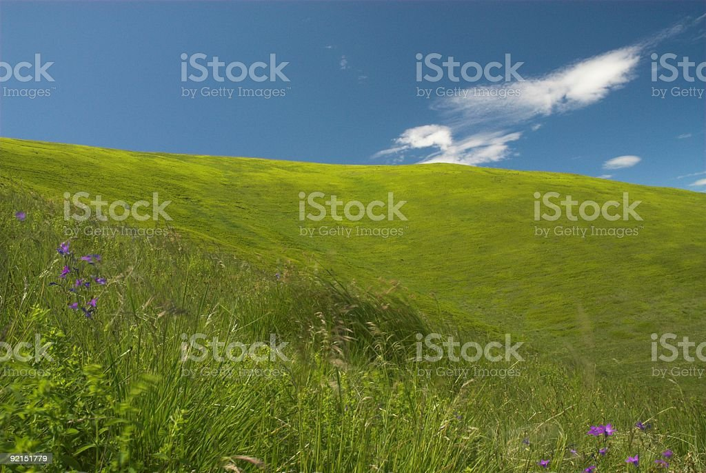 sunny paradise in mountains with violet flowers stock photo