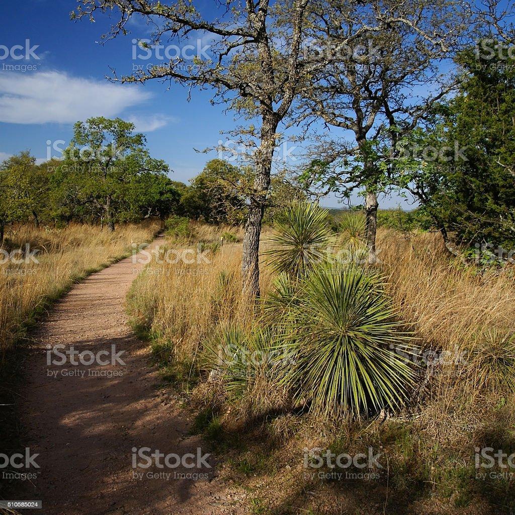 Sunny Path at Enchanted Rock park, Texas stock photo