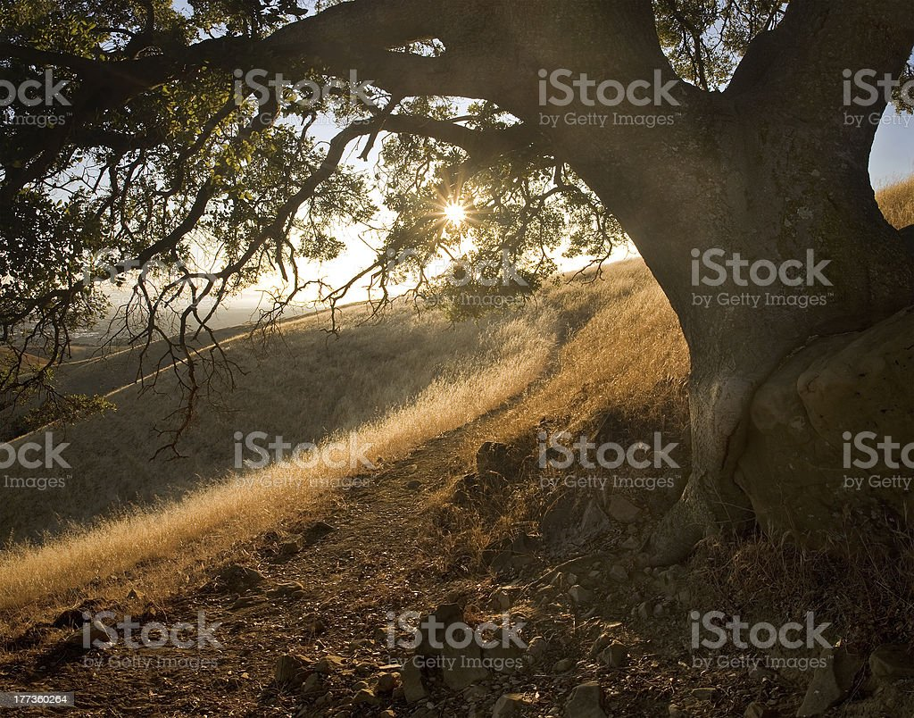Sunny path under oak on idyllic hillside stock photo