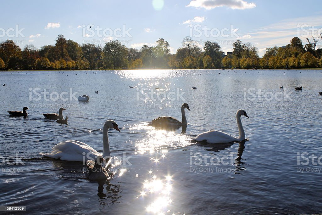 Sunny reflections in Hyde Park stock photo