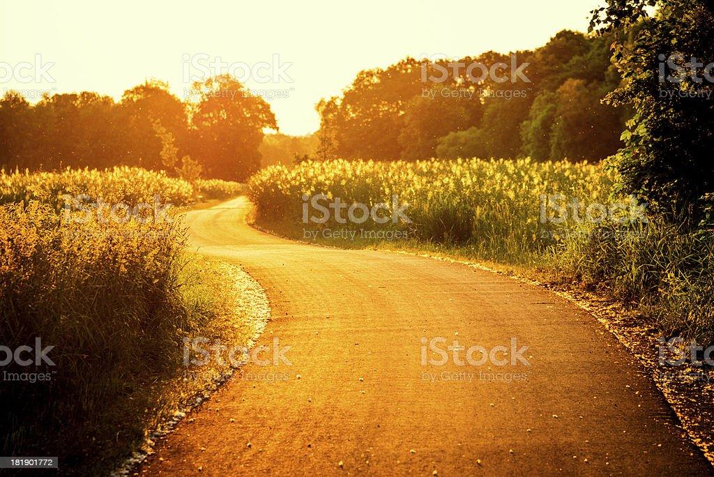 Sunny Rural Road royalty-free stock photo