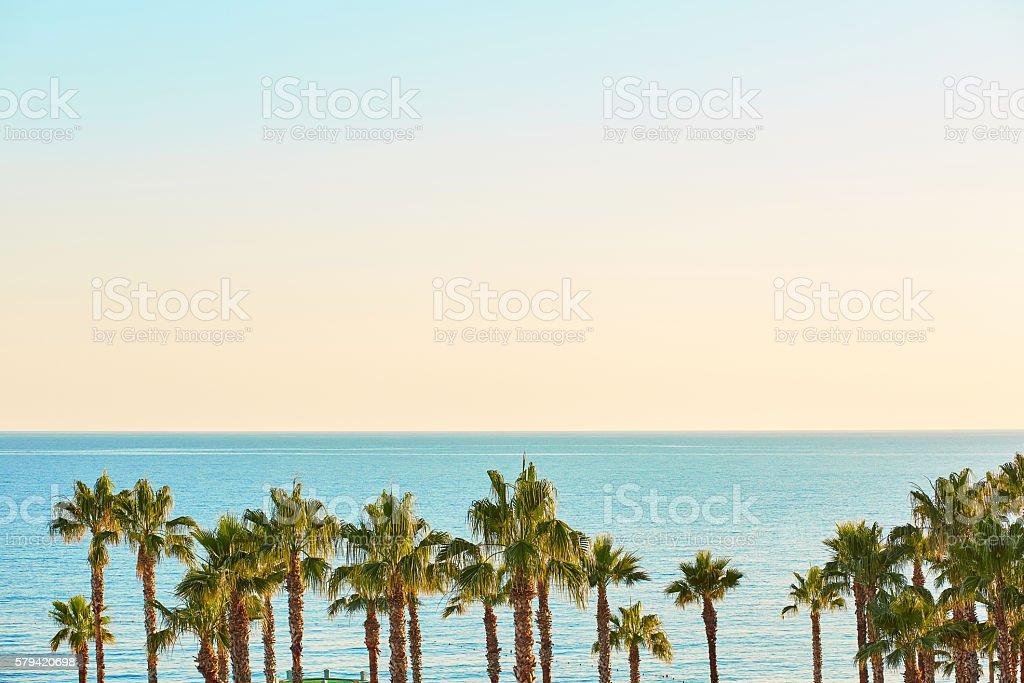 Sunny sea coast with palms stock photo