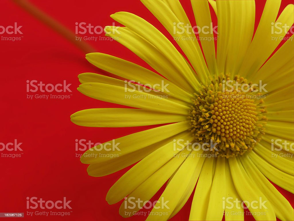 Sunny Side Down stock photo