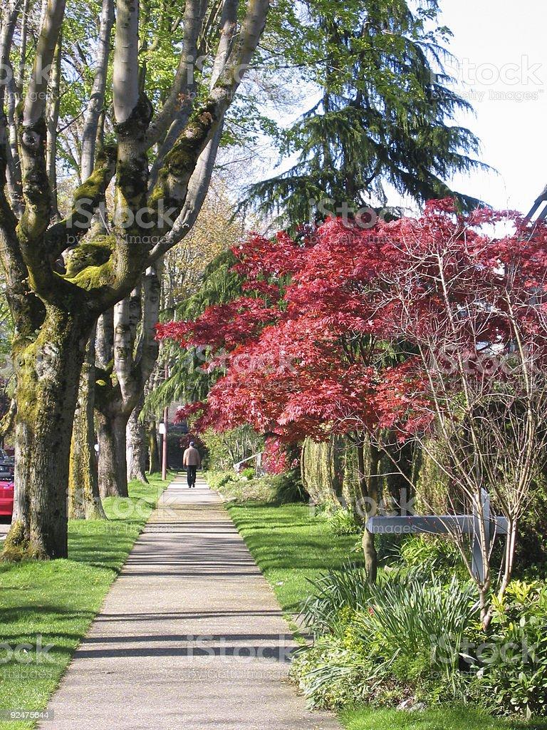 sunny sidewalk royalty-free stock photo