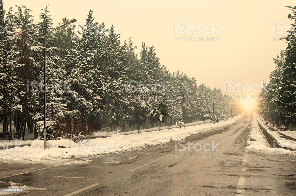 sunny snowy forest stock photo