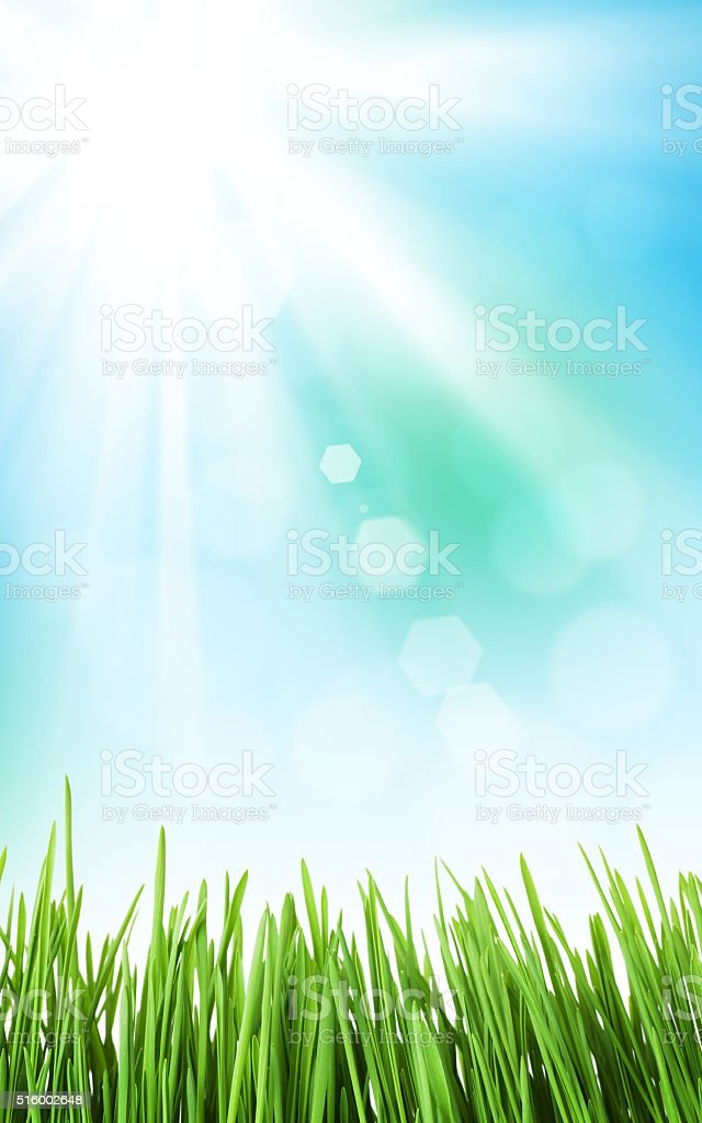 Sunny spring background with grass and sky stock photo