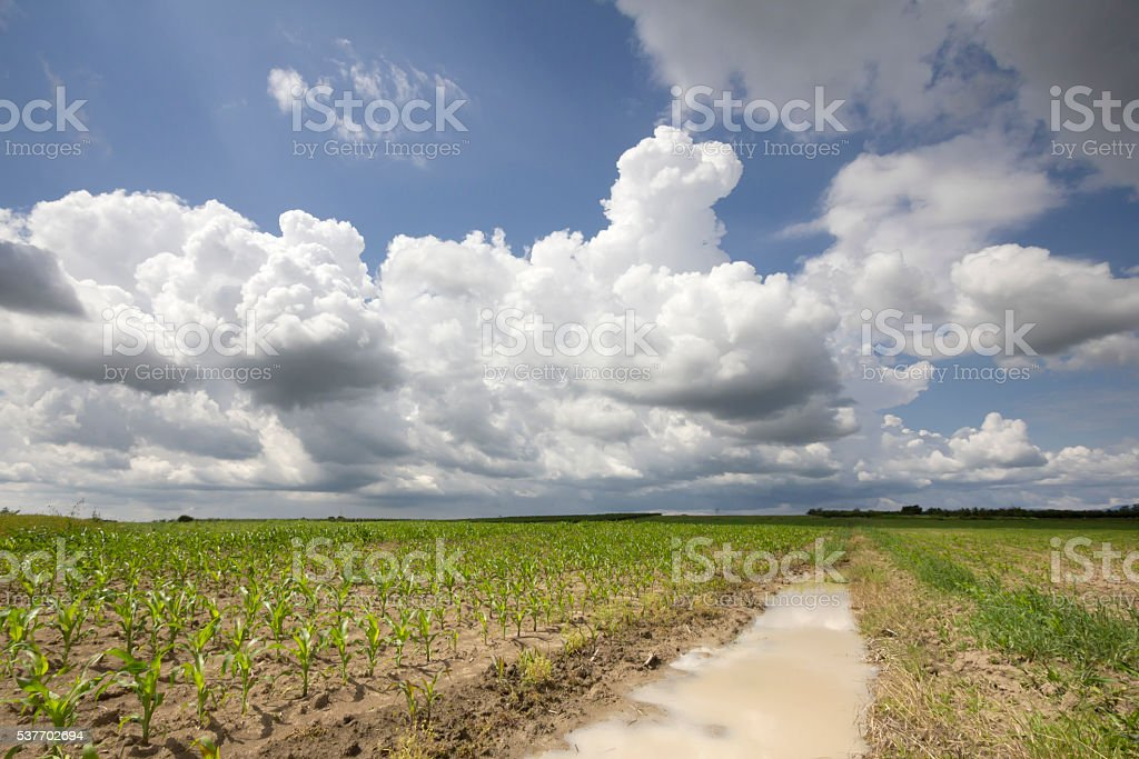 Sunny springtime landscape with cumulonimbus clouds in European countryside stock photo