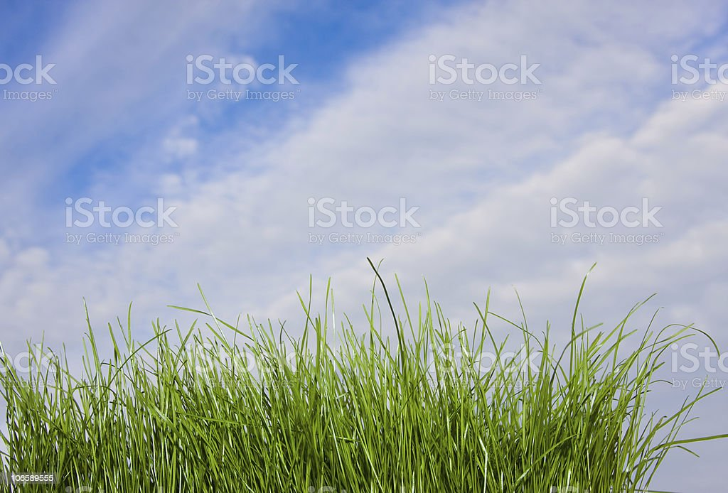 Sunny summer day and grass stock photo
