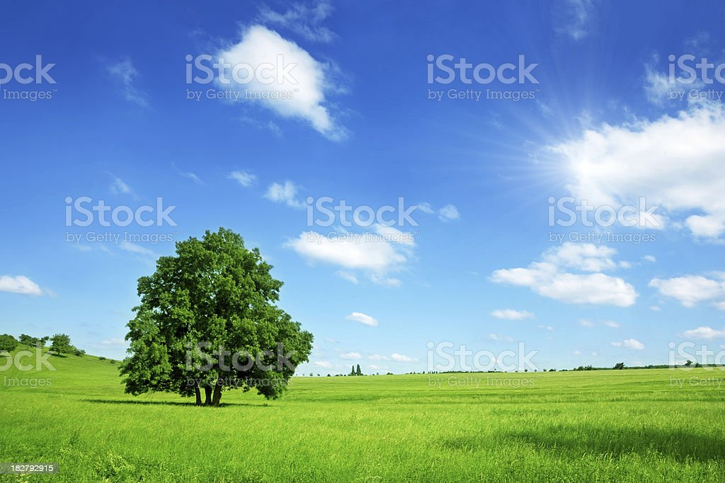 Sunny Summer Landscape stock photo