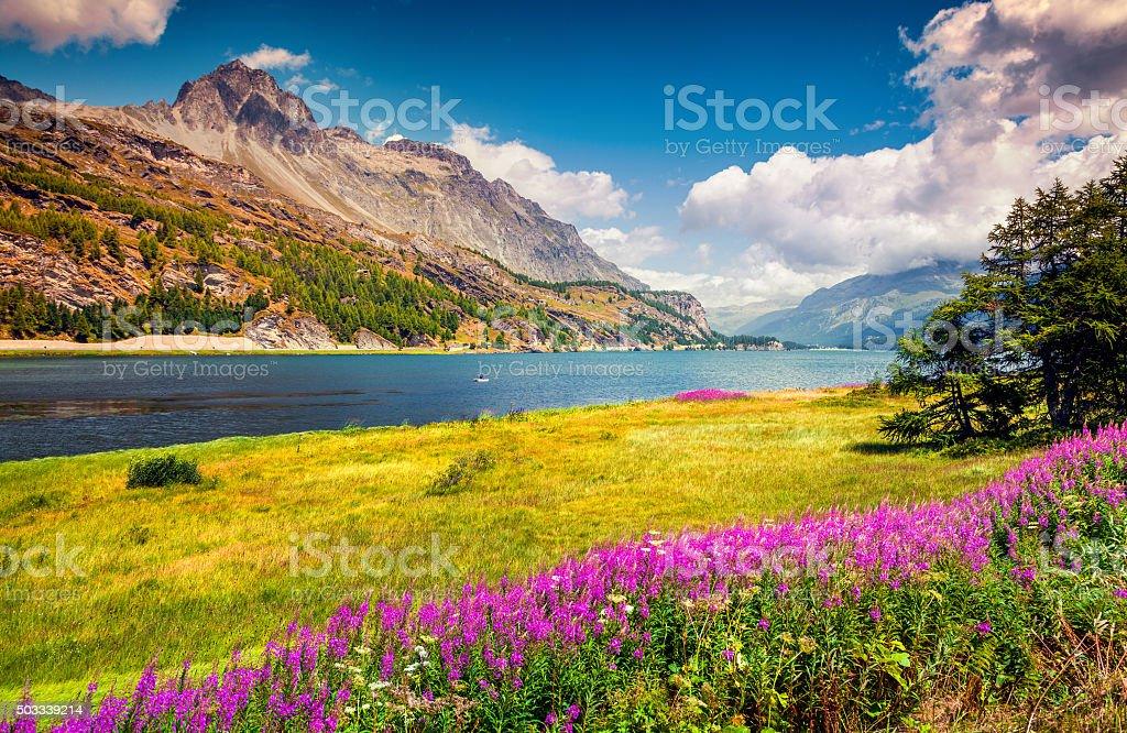 Sunny summer scene on the Silsersee lake stock photo