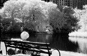 Sunny Sunday in Central Park