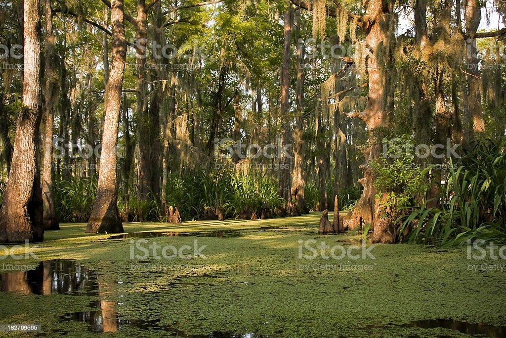 Sunny Swamp stock photo