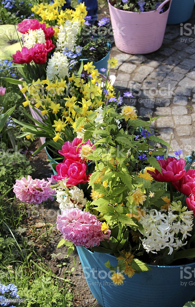 Sunny terrace with a lot of flowers royalty-free stock photo