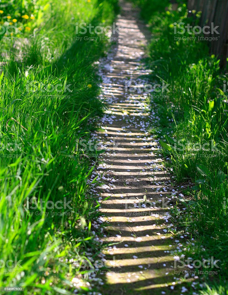 Sunny trail in fresh greenery in the garden, on rural street stock photo