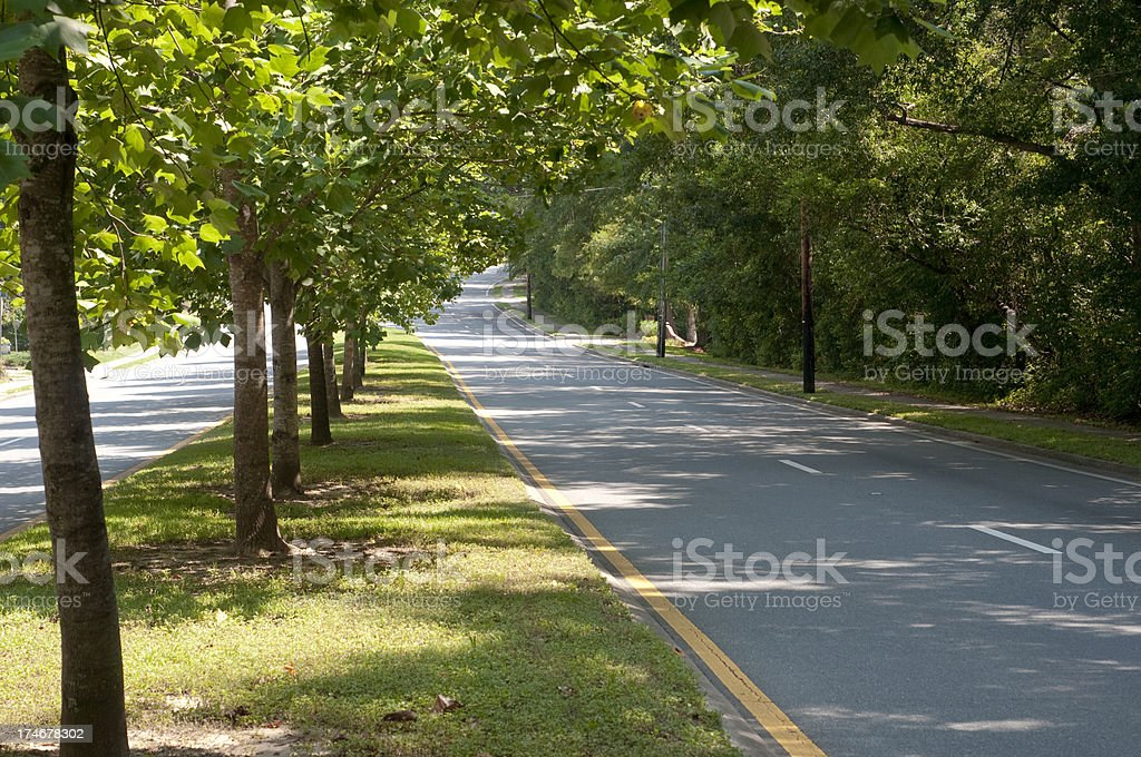 Sunny, Tree Lined Road in the Afternoon Sunlight royalty-free stock photo