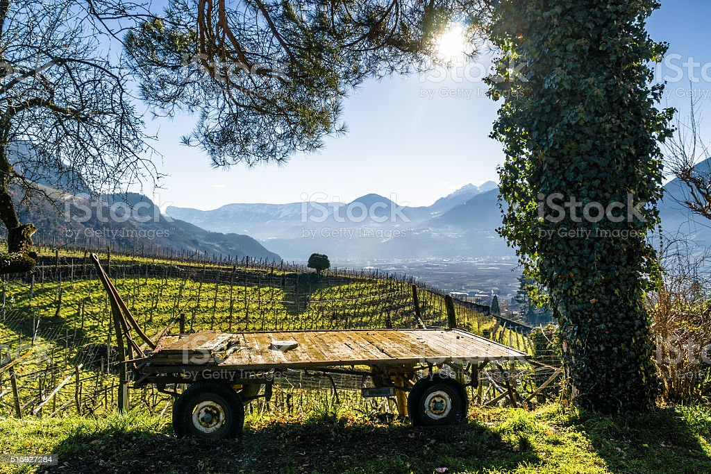 Sunny view of vineyards valley of castle Rametz near Merano. stock photo