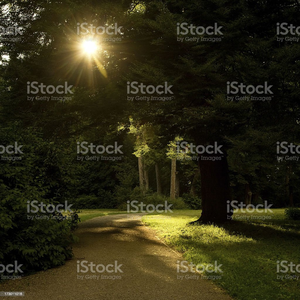 Sunny Way royalty-free stock photo