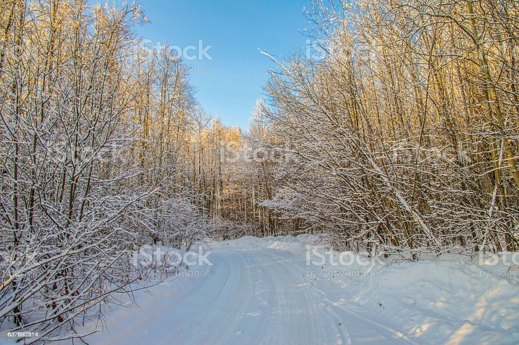 a Winter forest landscape, snow sunny weather