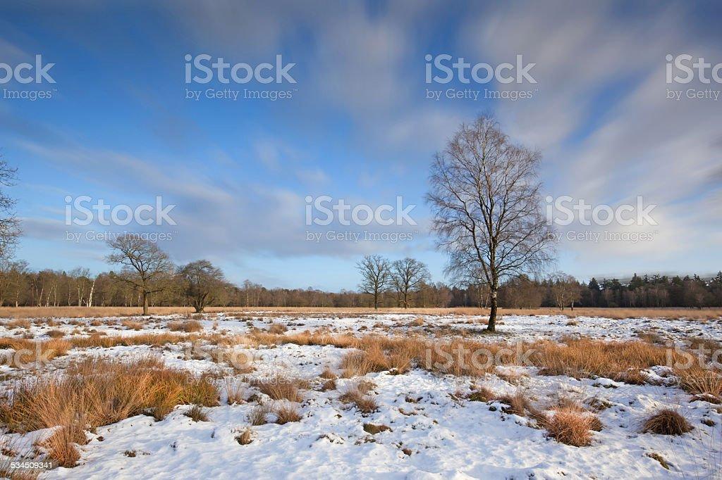 Sunny winter day in National Park de Hoge Veluwe stock photo