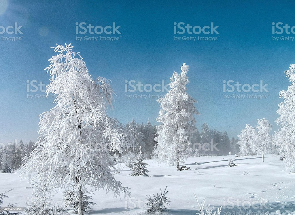 sunny winter day in the snow-covered Black Forest stock photo