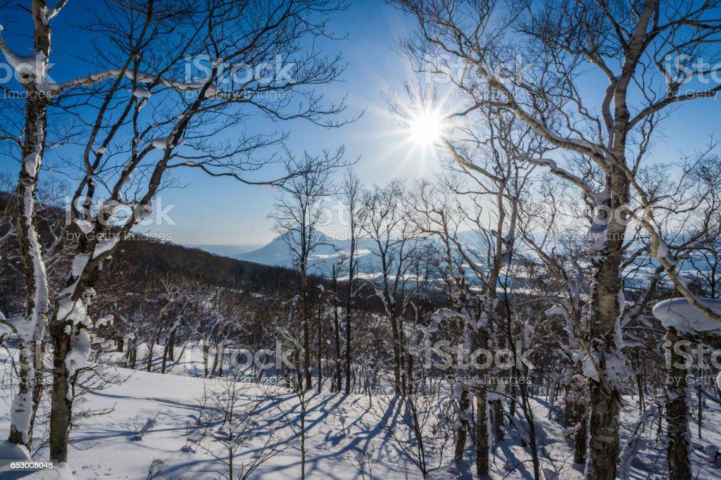 Sunny Winter Days stock photo