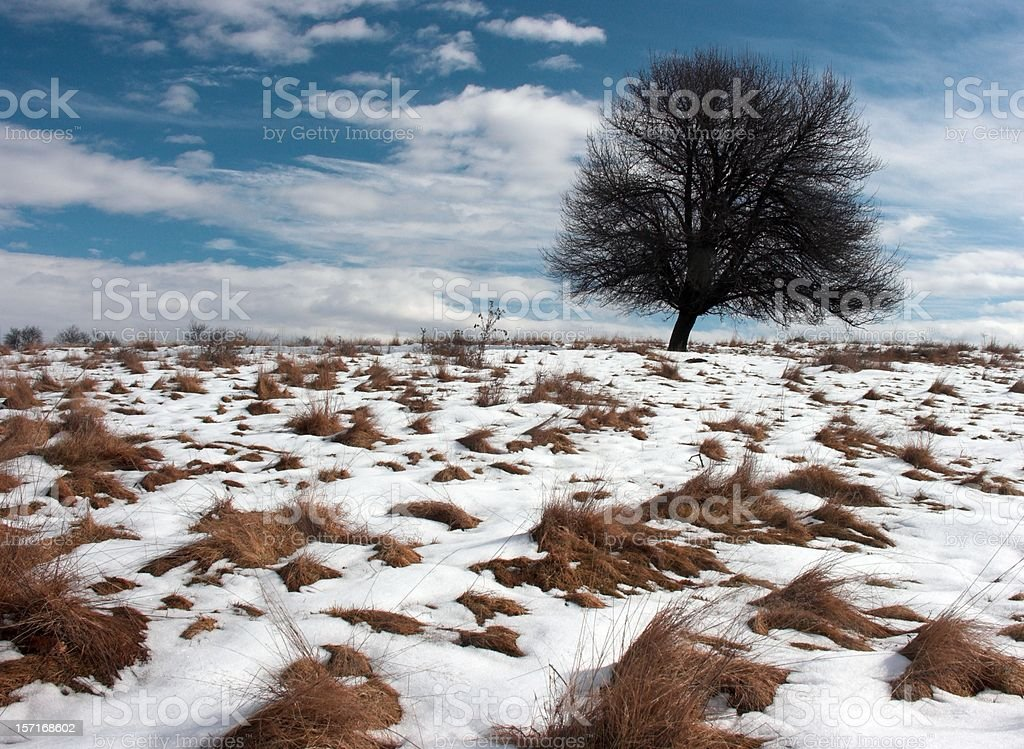 Sunny Winter Hill 6 stock photo