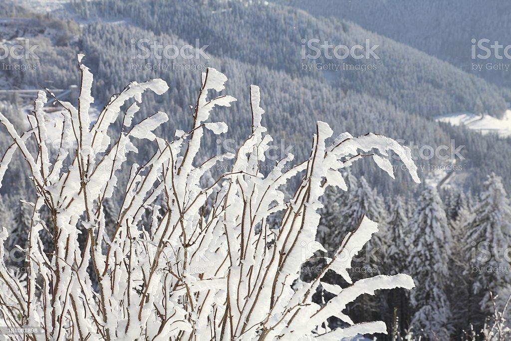 sunny winterday stock photo