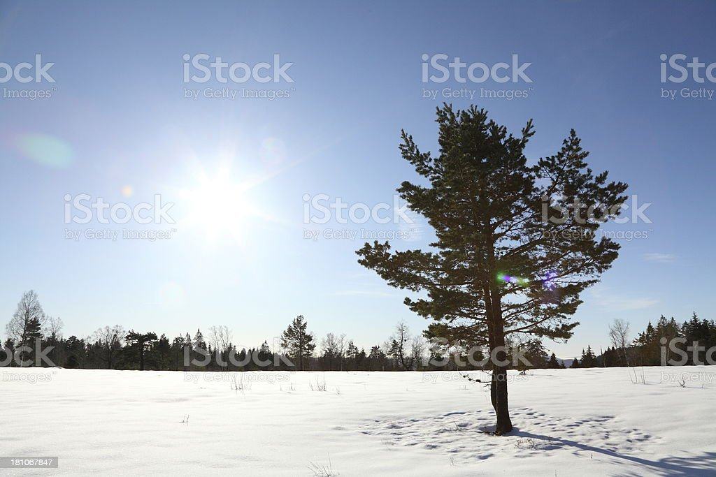 sunny winterday with snow and sun  in Black Forest stock photo