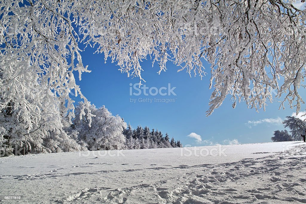 sunny winterday with snowy trees and landscape royalty-free stock photo