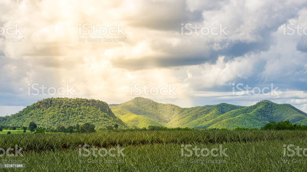 Sunray over the mountains and pineapple field stock photo