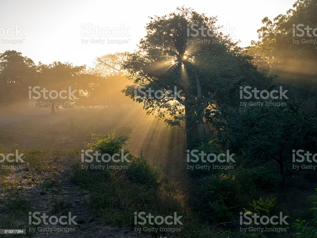 Sunrays and Trees royalty-free stock photo