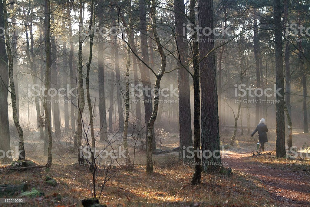 Sunrays in sppoky wood with walking woman royalty-free stock photo