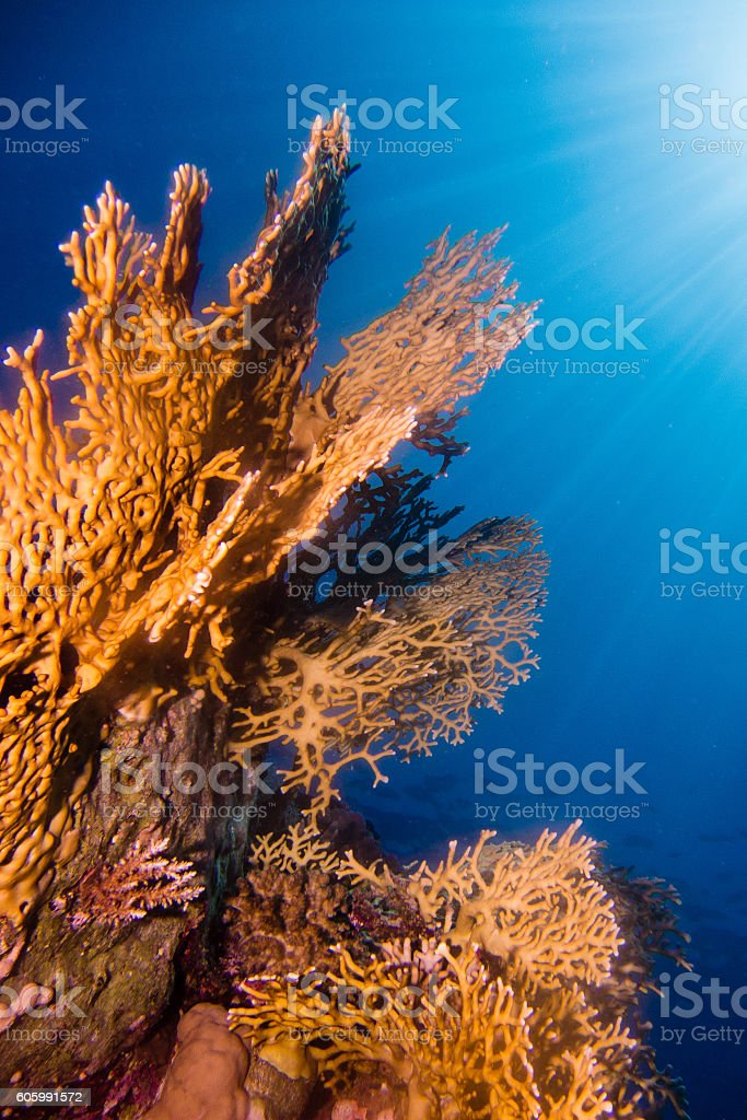 Sunrays in the coral garden stock photo