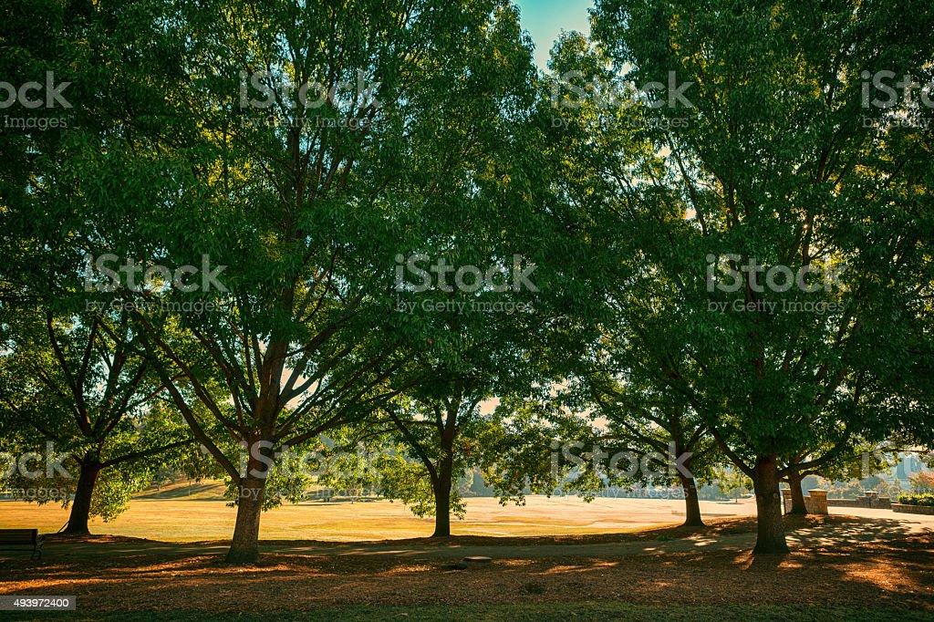 sunrays on Piedmont Park stock photo