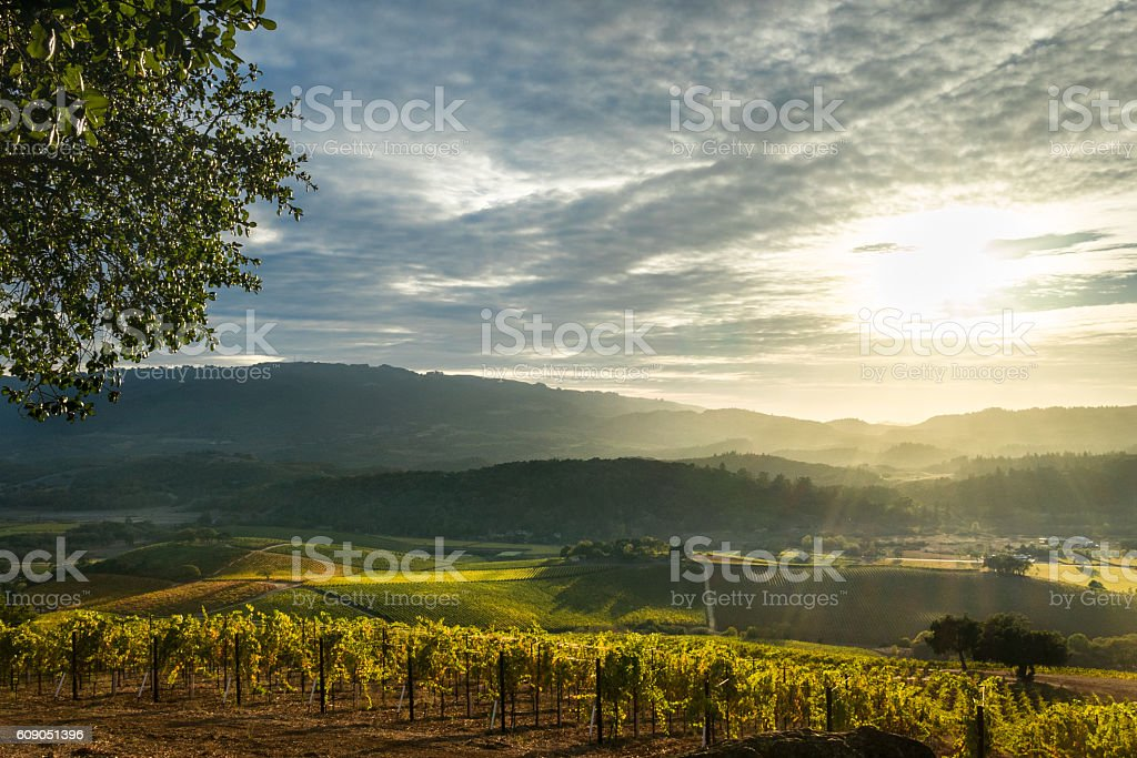 Sunrays shine on patchwork Sonoma vineyard and mountains at sunset stock photo