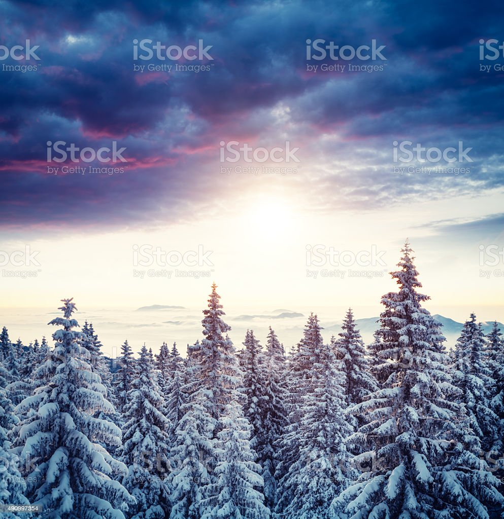Sunrise Above The Winter Forest stock photo