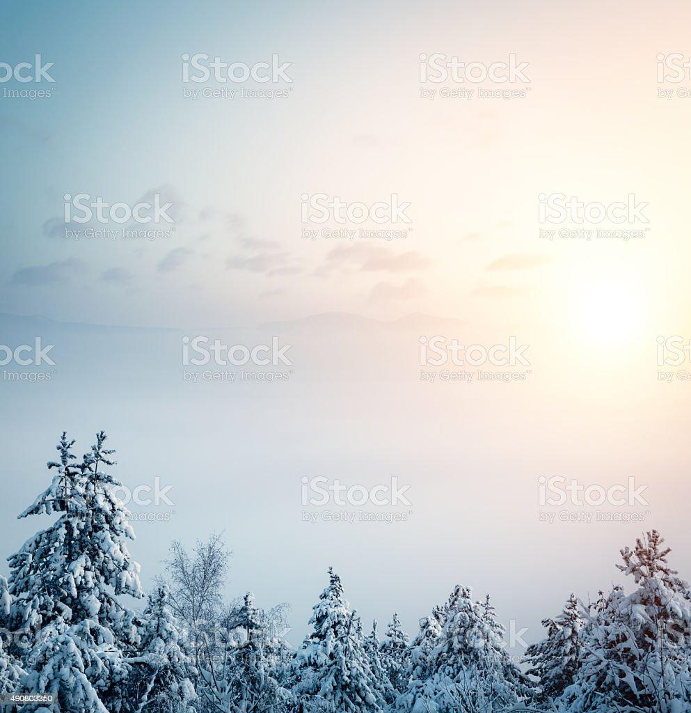 Sunrise Above The Winter Trees stock photo