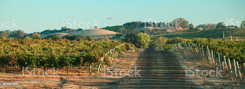 Sunrise and Balloons over the Vineyard stock photo