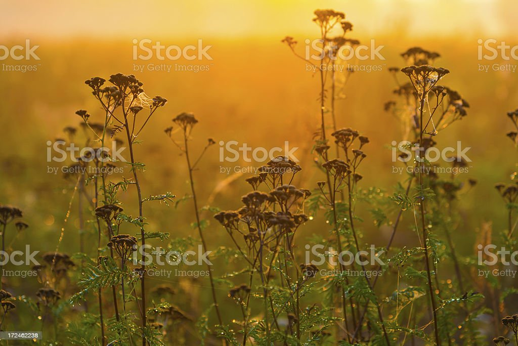 Sunrise and Fog Over the Field royalty-free stock photo