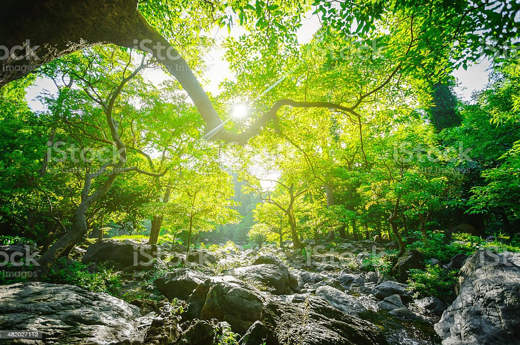 Sunrise and green tree in the forest stock photo