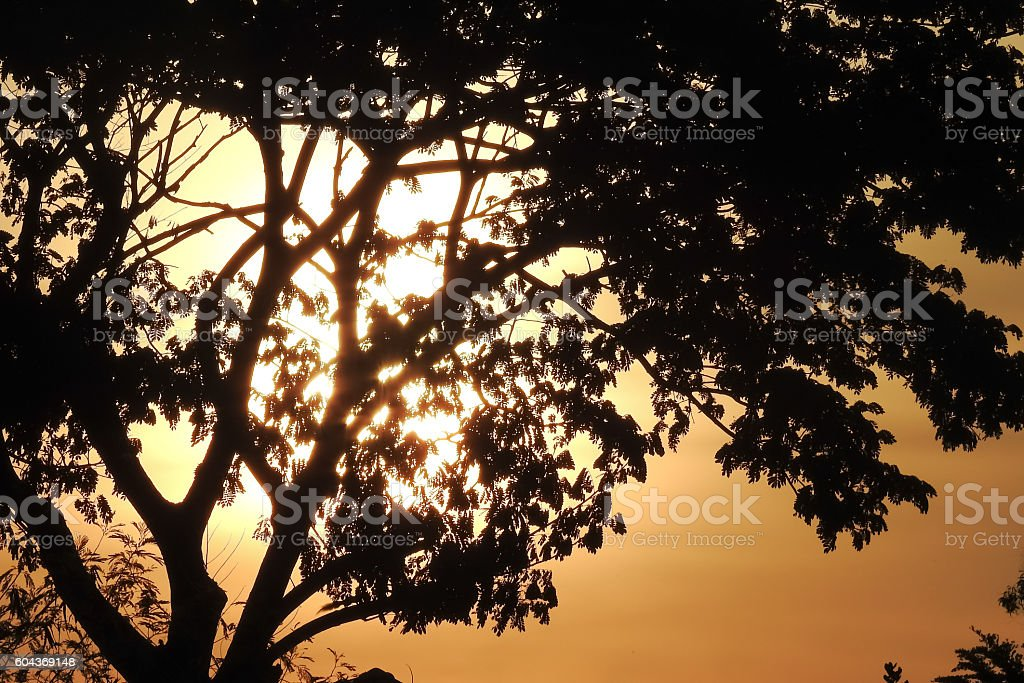 Sunrise and silhouette tree stock photo