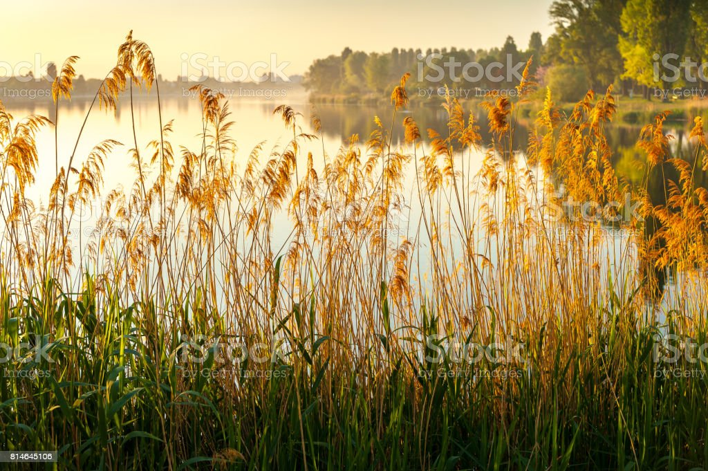 Sunrise at Alte Donau stock photo