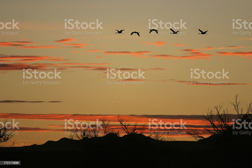 Sunrise at Bosque del Apache royalty-free stock photo