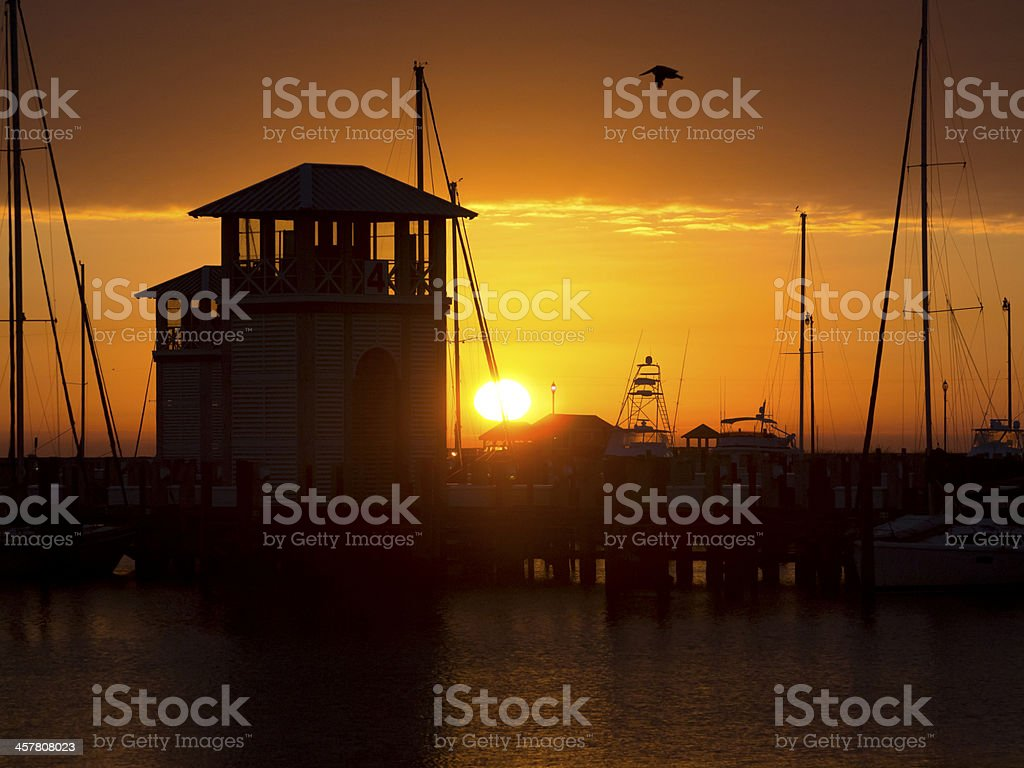 Sunrise at Gulfport Harbor with Flying Pelican stock photo