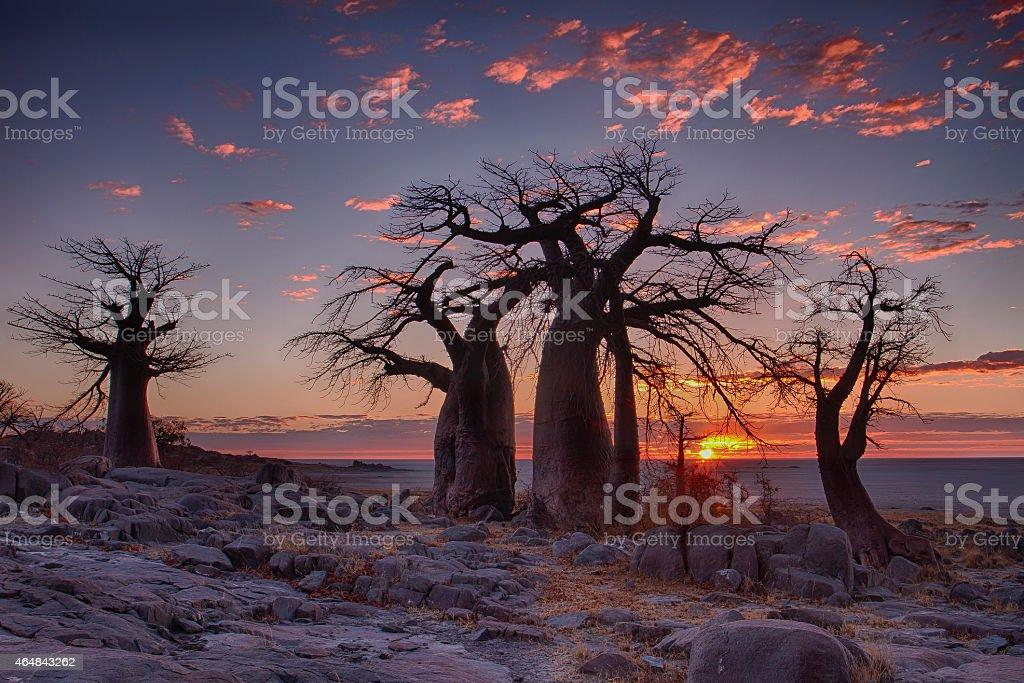 Sunrise at LeKubu Island - Botswana stock photo