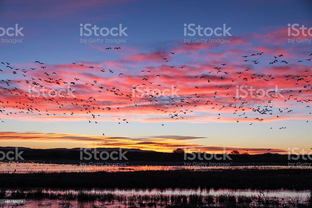Sunrise at the Refuge stock photo