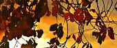 Sunrise Autumn Colours