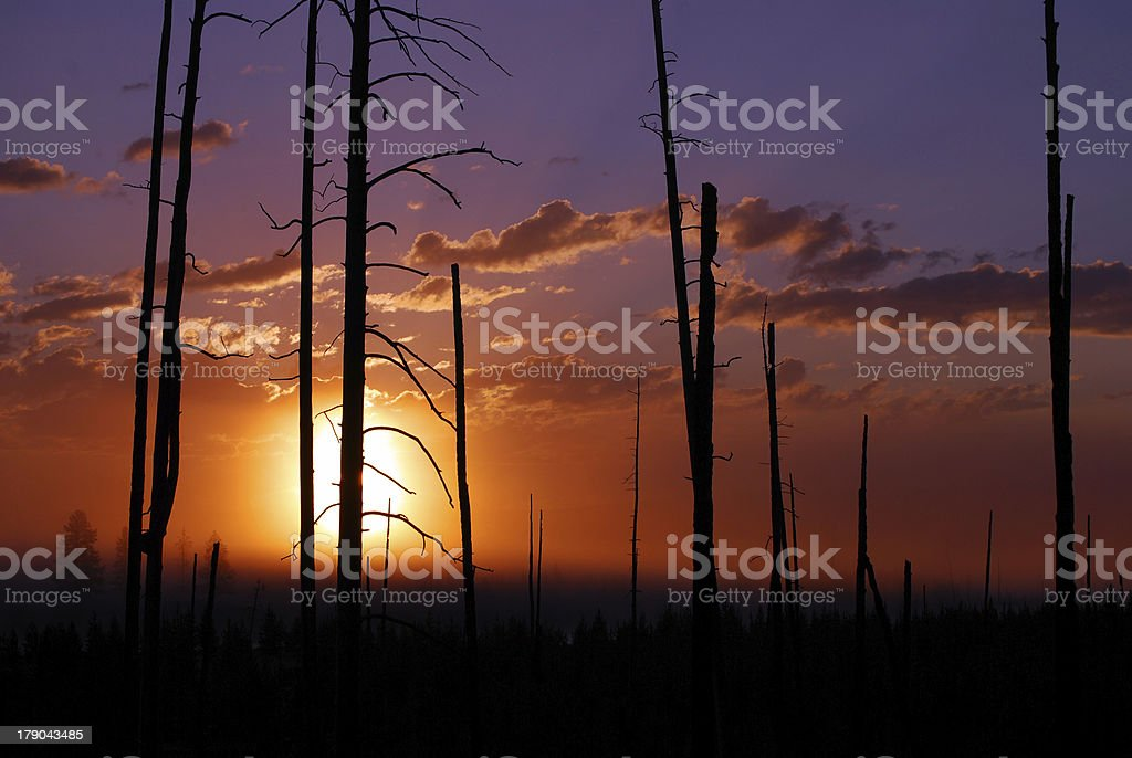 Sunrise behind burned forest royalty-free stock photo